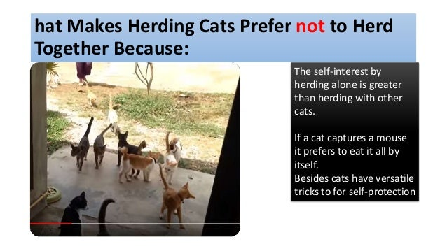 hat Makes Herding Cats Prefer not to Herd Together Because: The self-interest by herding alone is greater than herding wit...