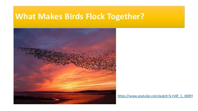 What Makes Birds Flock Together? https://www.youtube.com/watch?v=V4f_1_r80RY