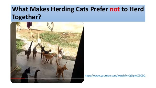 What Makes Herding Cats Prefer not to Herd Together? https://www.youtube.com/watch?v=Q6IpknZ5C9Q