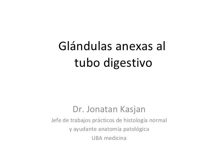 Glándulas anexas al  tubo digestivo Dr. Jonatan Kasjan Jefe de trabajos prácticos de histología normal y ayudante anatomía...