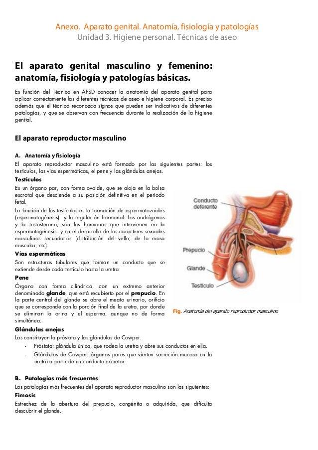 Anexo aparato genital_anatom_ia_fisiologia_y_patologias