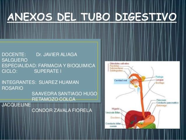 ANEXOS DEL TUBO DIGESTIVO  DOCENTE: Dr. JAVIER ALIAGA SALGUERO ESPECIALIDAD: FARMACIA Y BIOQUIMICA CICLO: SUPERATE I INTEG...