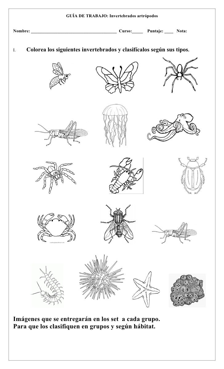 Anexos invertebrados