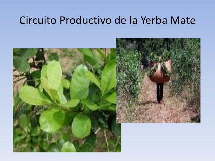 Circuito Productivo De La Yerba Mate : Anexo visual unidades y