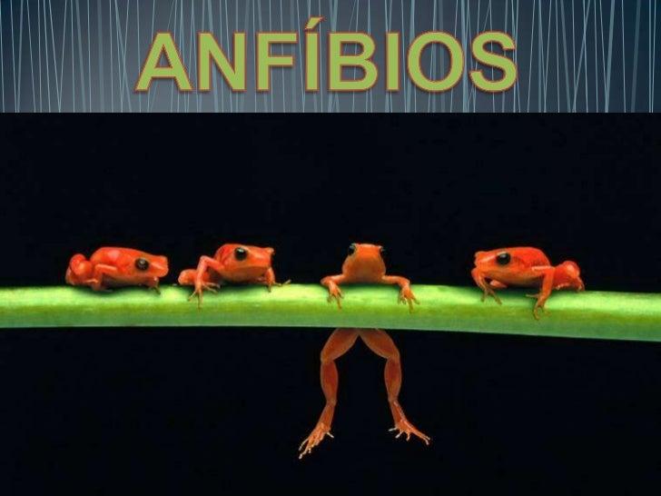 • Primeiros vertebrados  terrestres• Metamorfose – mudança de  hábitat e muitas vezes de nicho  ecológico.