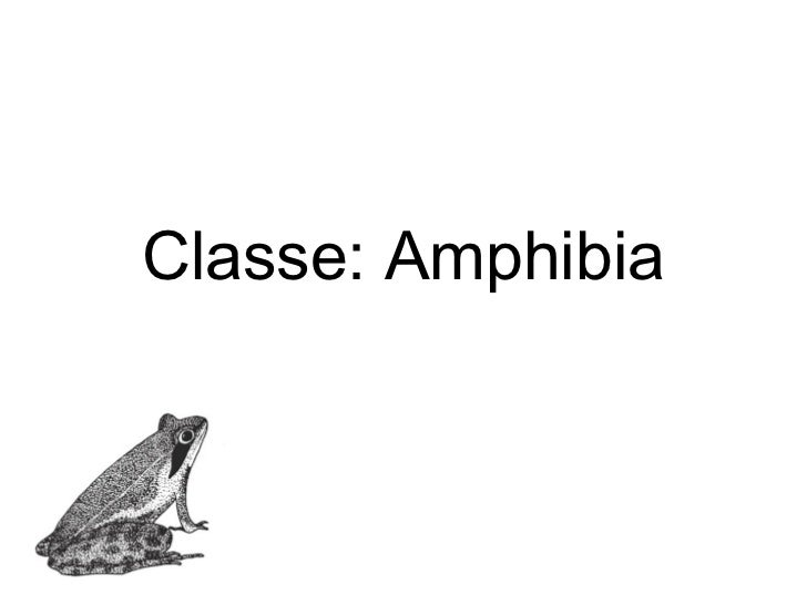 Classe: Amphibia