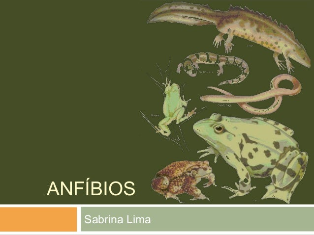 ANFÍBIOS  Sabrina Lima