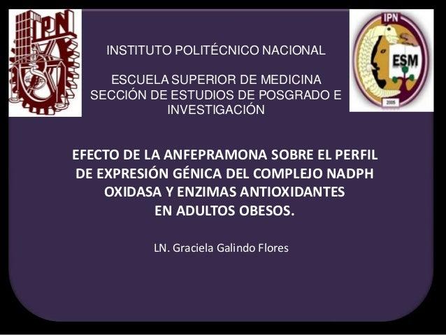 EFECTO DE LA ANFEPRAMONA SOBRE EL PERFIL DE EXPRESIÓN GÉNICA DEL COMPLEJO NADPH OXIDASA Y ENZIMAS ANTIOXIDANTES EN ADULTOS...