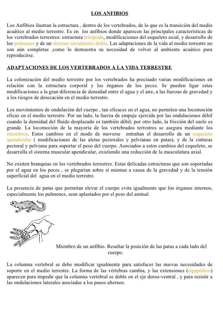 LOS ANFIBIOS  Los Anfibios ilustran la estructura , dentro de los vertebrados, de lo que es la transición del medio acuáti...
