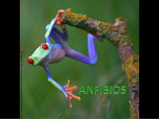 http://i.telegraph.co.uk/multimedia/archive/01891/cool-frog_1891806i.jpg