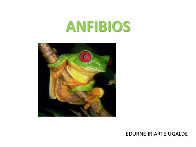 ANFIBIOS  EDURNE IRIARTE UGALDE