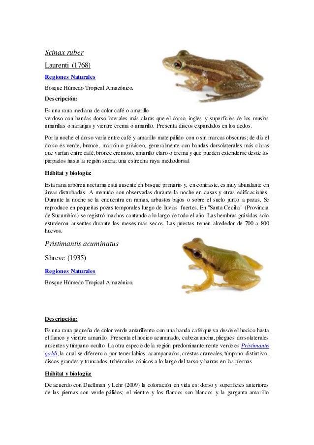Moderno Página De Color De Rana Friso - Dibujos Para Colorear En ...