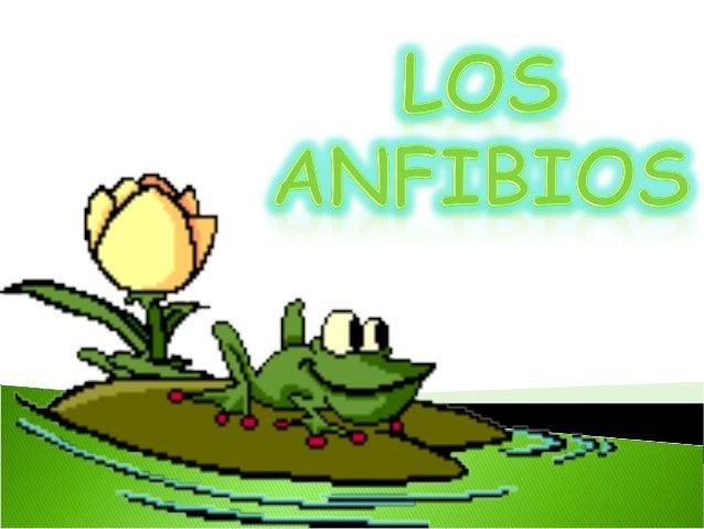 Fecundación externa  Las larvas atraviesan 3  estadios  Amplexo o abrazo  nupcial  Apareamiento en el  agua  Pre metamórfi...