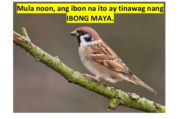 ang alamat ng jejemon essay What is the correct jejemon term for the word millionaire  pinawi nito ang init ng araw at syang nagpakalmante sa dalawang damdaming parang bata lang kung mag .