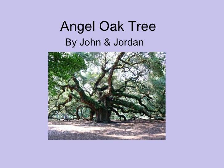 Angel Oak Tree By John & Jordan