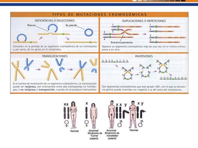 Generalidades Agentes físicos o químicos que aumentan a tasa de mutación espontánea de una especie. Dañan el ADN o alteran...