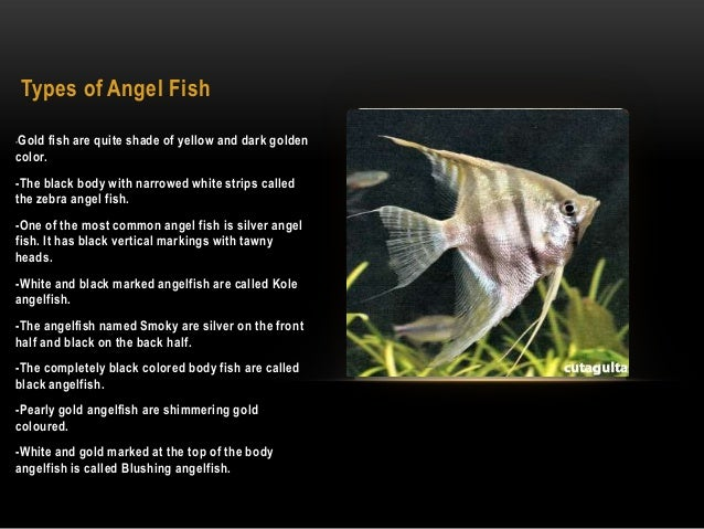 slide Angel Fish R32 English Pewter Emblem on a Tie Clip