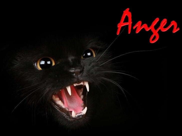 http://fauna-flora.gportal.hu/http://judy-cats.blogspot.com/
