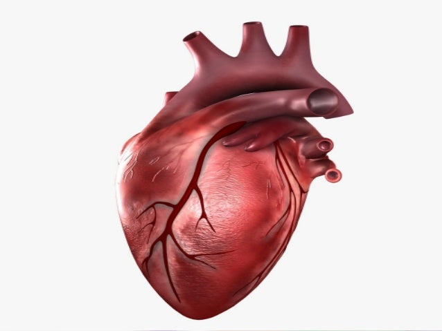an analysis of the angina pectoris on the human heart An analysis of the characteristics of angina pectoris, a symptom of coronary heart disease  more essays like this: the human heart, coronary heart disease .