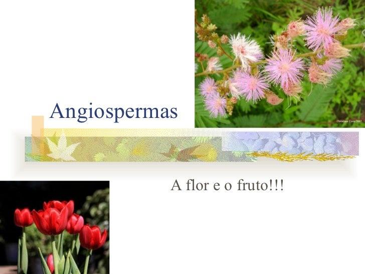 Angiospermas A flor e o fruto!!!
