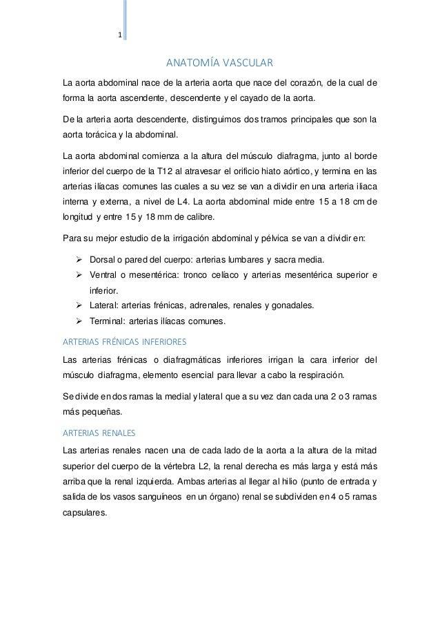 Vistoso Músculos De La Pelvis Anatomía Ct Regalo - Anatomía de Las ...