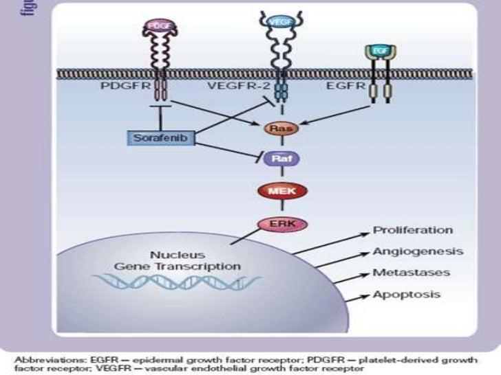 Figure 1 VEGF family ligands and receptorsBiochemical Society Transactions      www.biochemsoctrans.org          Biochem. ...