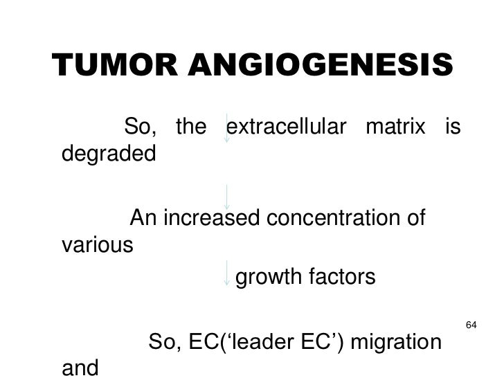 (C) Maturation of the          neovasculature• THE FINAL PHASE• Establishment of polarity of the endothelial cells :     b...