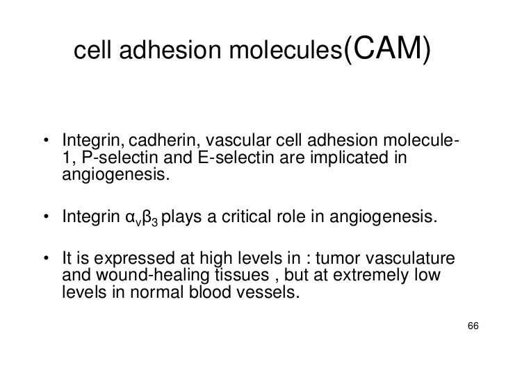 Cellular angiogenesis-overviewNature Reviews Drug Discovery 1, 415-426 (2002)