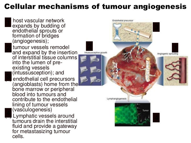 Key differences in tumour vasculatureDifferent flow  characteristics or  blood volumeMicrovasculature  permeabilityIncreas...