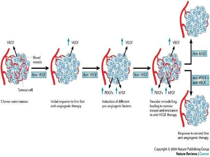development of angiogenesis            inhibitorsUsually follows any the following :1. inhibition of tumor cell synthesis ...