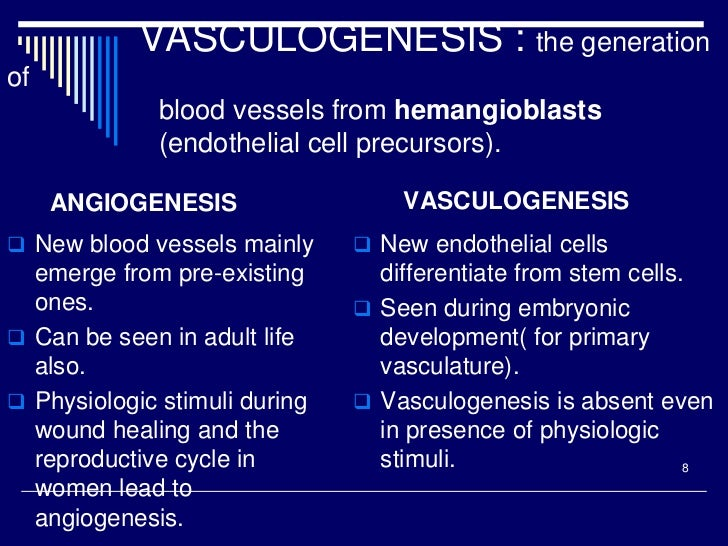VASCULOGENESIS : the generationof              blood vessels from hemangioblasts              (endothelial cell precursors...