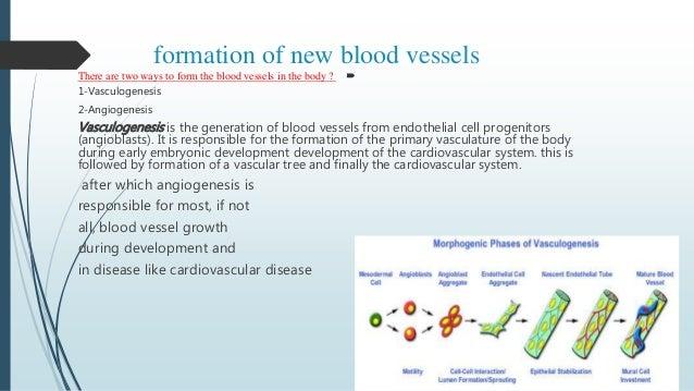 What is angiogenesis?