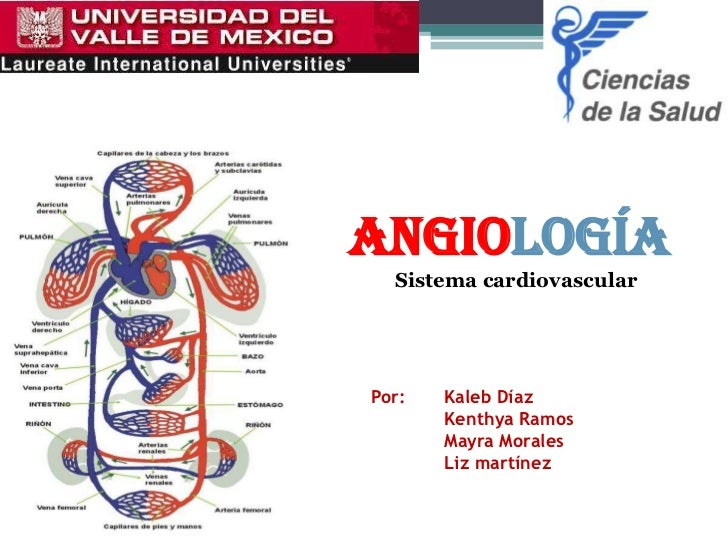 ANGIOLOGÍA  Sistema cardiovascularPor:   Kaleb Díaz       Kenthya Ramos       Mayra Morales       Liz martínez