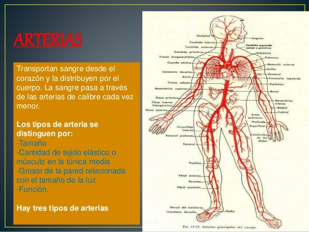ANGIOLOGIA ANATOMIA PDF DOWNLOAD