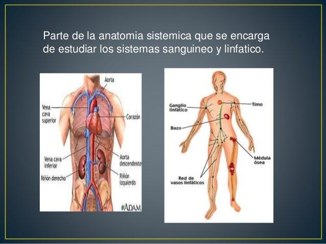 Angiologia: Parte de la anatomia