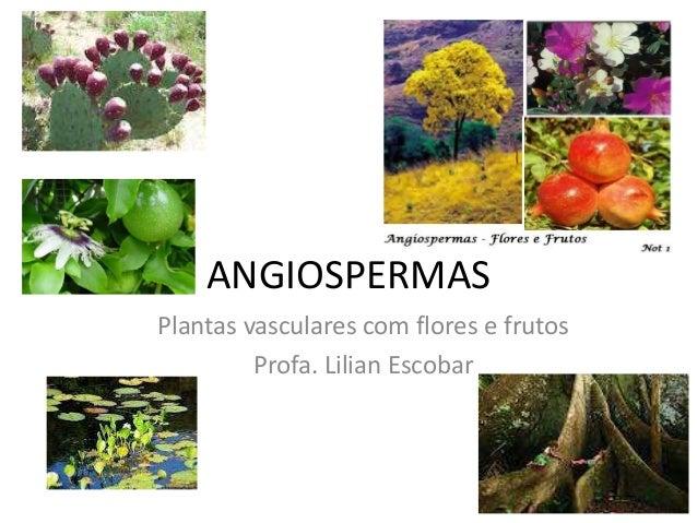 ANGIOSPERMASPlantas vasculares com flores e frutos         Profa. Lilian Escobar