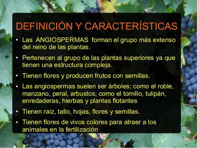 Angiospermas for Las caracteristicas de los arboles