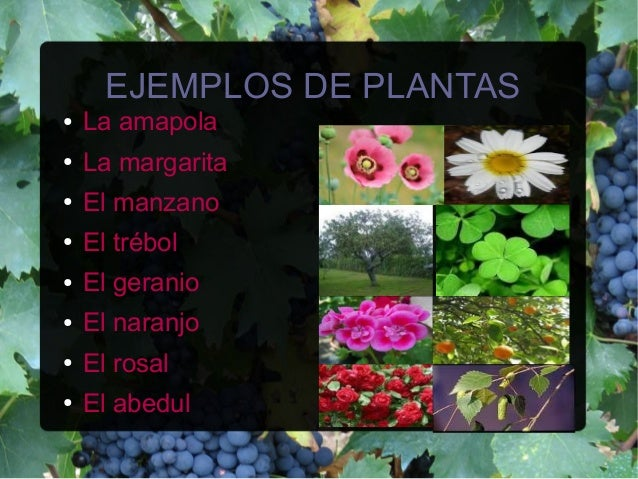 Angiospermas for Plantas ornamentales ejemplos y nombres