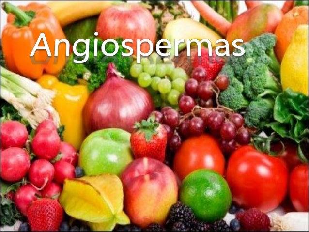 """Introdução • As Angiospermas (do grego: angeos -""""bolsa"""" e sperma - """"semente"""") são plantas espermatófitas cujas sementes sã..."""