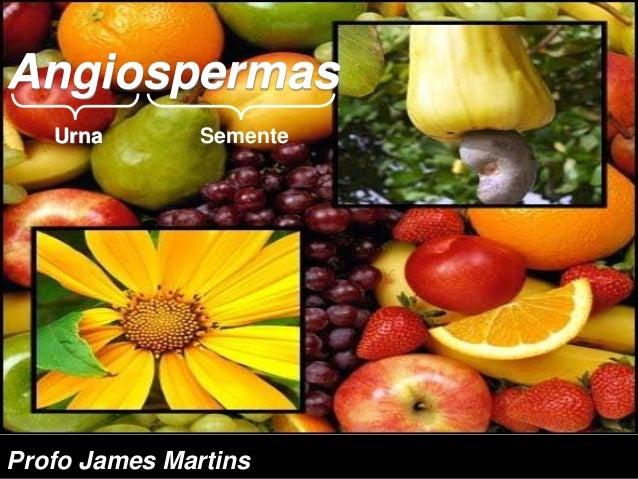 Angiospermas Urna Semente Profo James Martins