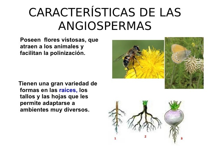 Angiospermas 2 for Cuales son las caracteristicas de un mural