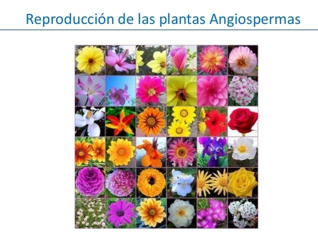 Reproducci n plantas angiospermas for Plantas para estanques de peces