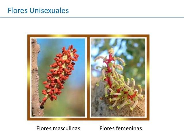 Reproduccion Plantas Angiospermas