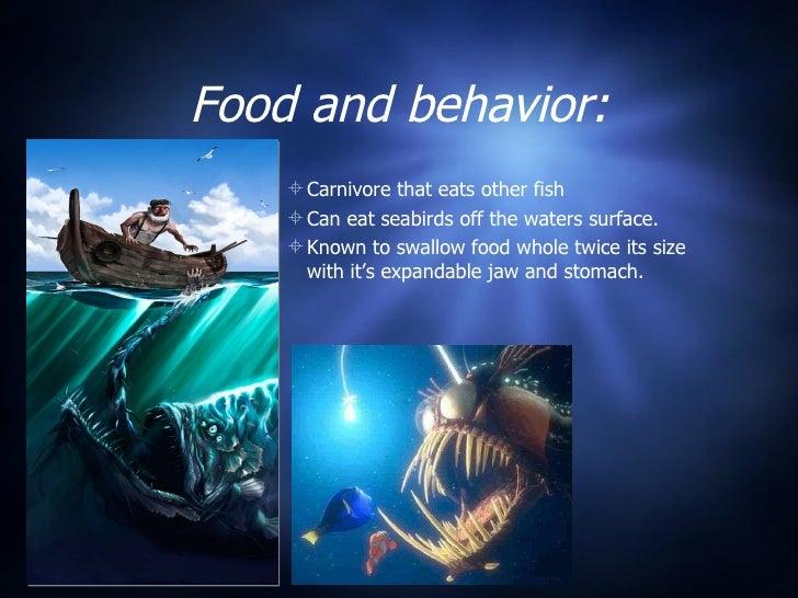 Anglerfish for What is an angler fish