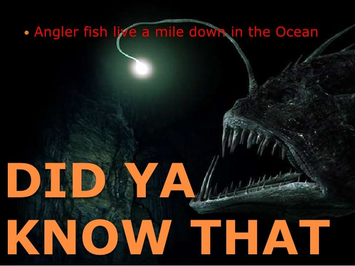 Angler fish for Where do angler fish live