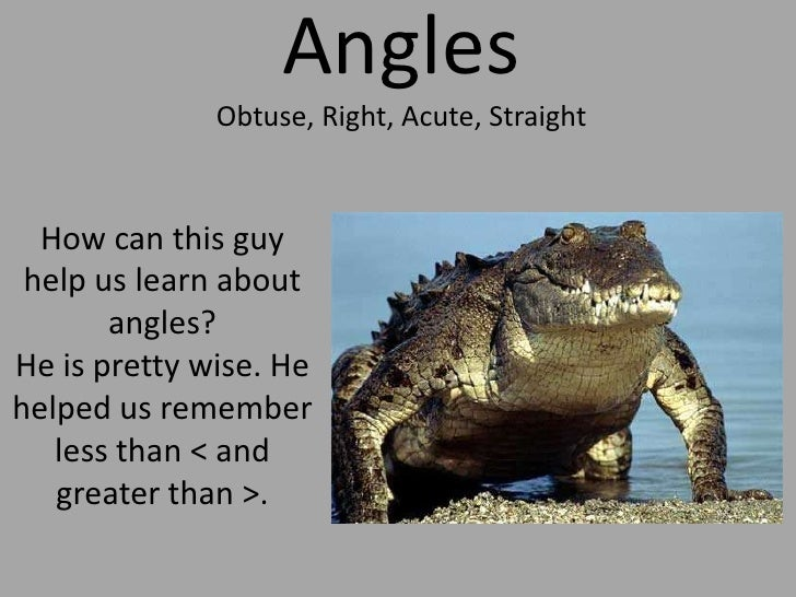 AnglesObtuse, Right, Acute, Straight<br />How can this guy help us learn about angles?He is pretty wise. He helped us reme...