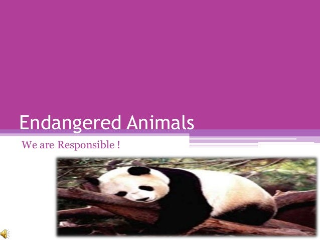 Endangered AnimalsWe are Responsible !