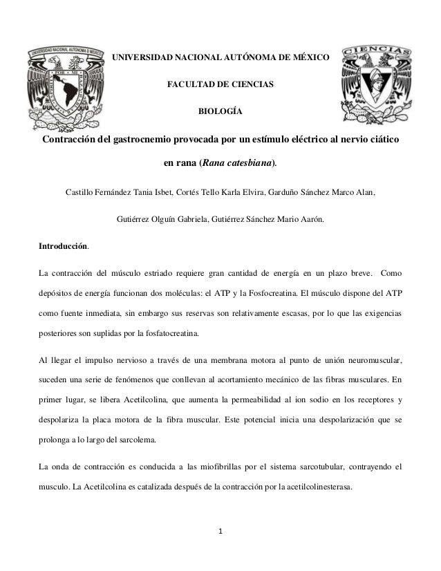 Reporte: Gastrocnemio Rana