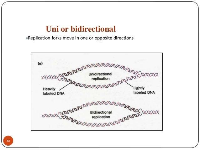Dna A Genetic Material Replication Damage And Repair