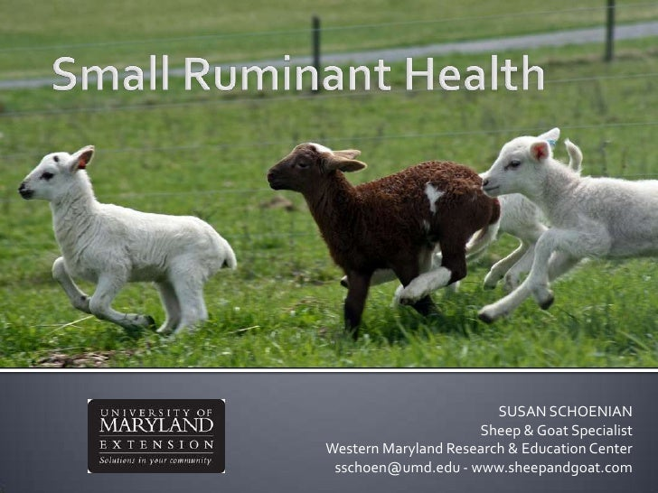 Small Ruminant Health<br />SUSAN SCHOENIANSheep & Goat Specialist<br />Western Maryland Research & Education Centersschoen...